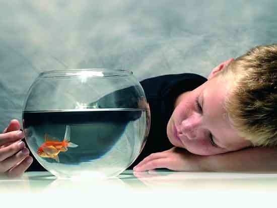 Boy with goldfish